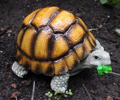 Черепаха маленькая - фото 5210