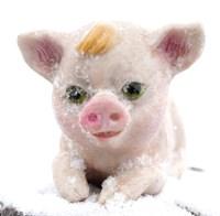 Свинка лежачая малая