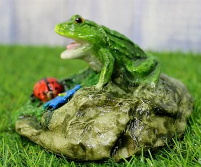 Лягушка на камне маленькая - фото 5137