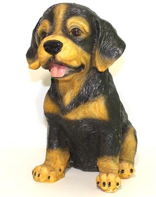 Ротвейлер щенок - фото 5378