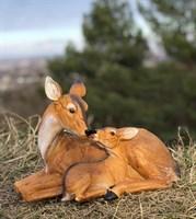 Олениха с олененком