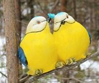 Птички влюбленные