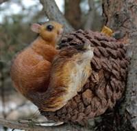 Белка на орехе