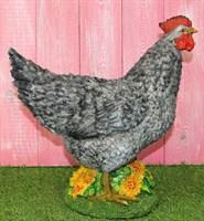 Курица серая